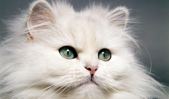 beauty cat academy